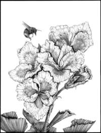 Geranium and Bee